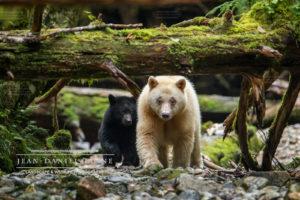 le mystérieux ours, esprit du Canada @ La Fraternelle - salle 1